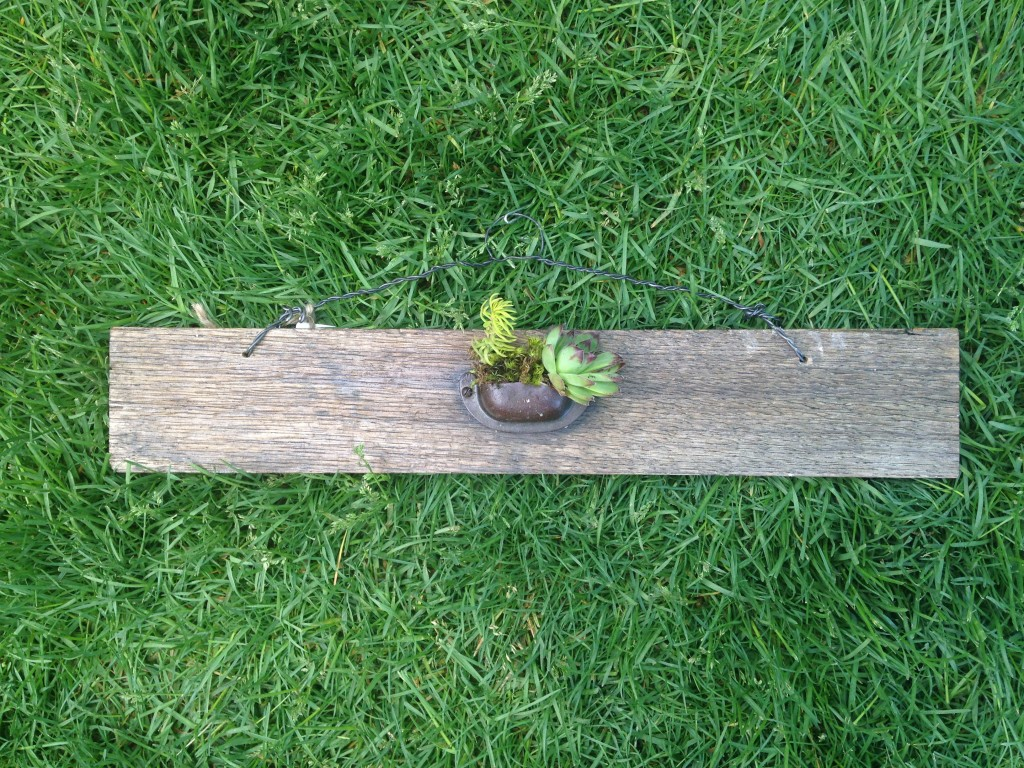 Drawer handle succulent planter