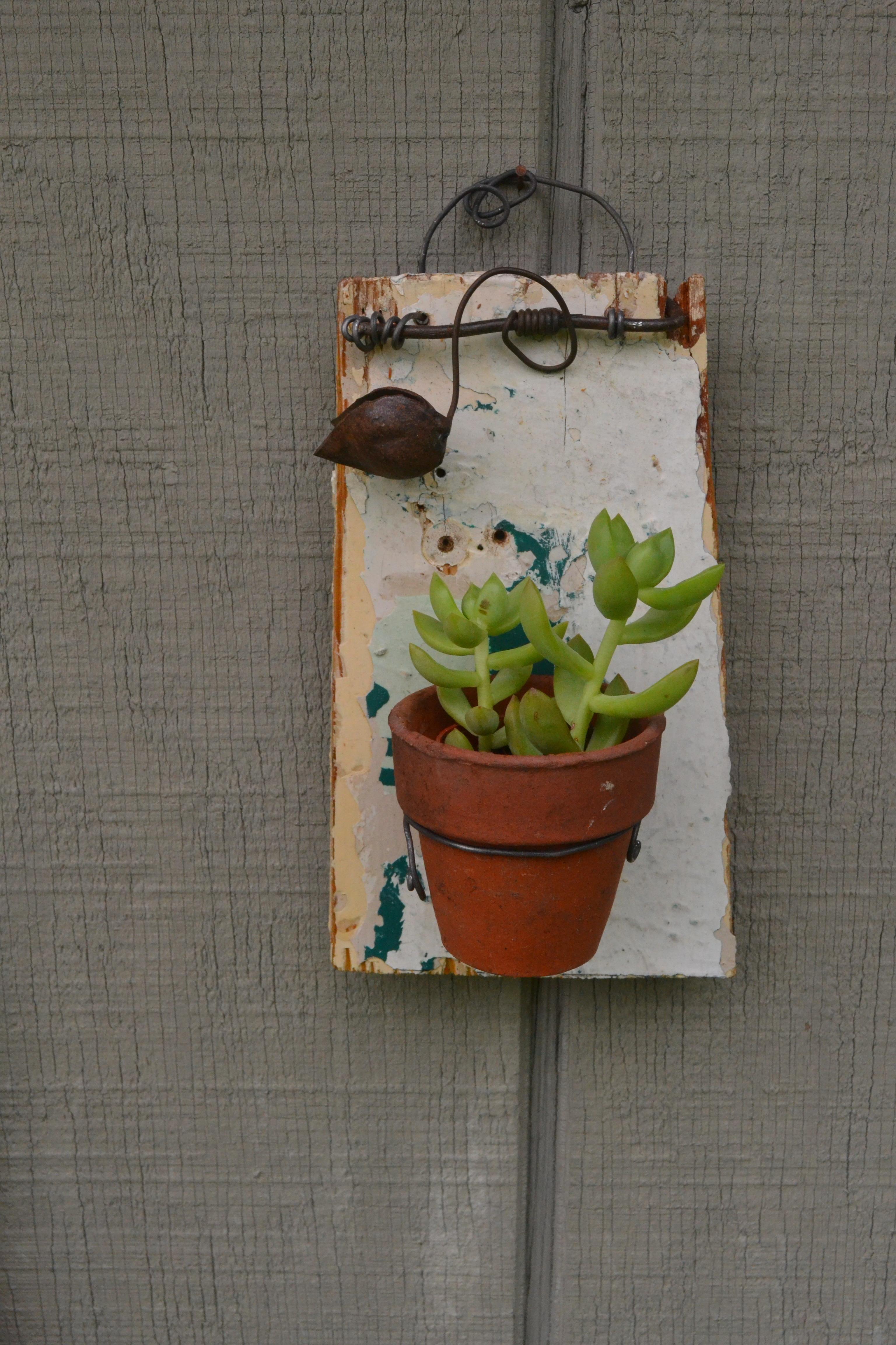 Succulent holder