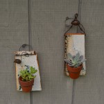 Succulent holders
