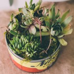 Succulent centerpiece in vintage coffee can